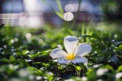 upadły kwiaty Fotografia Royalty Free