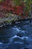 upadek creek Zdjęcie Stock