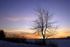 upadek drzewo Obraz Stock