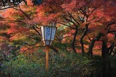 upadek Jesień przy Yasehieizanguchi Fotografia Royalty Free