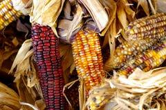 upadek kukurydziany Obraz Stock