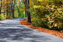 upadek leśna road Obraz Stock