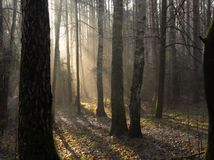 upadek mgły park Obrazy Royalty Free
