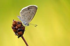upadek motyla roślin ogrodowej strzelać Zdjęcia Royalty Free