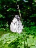 upadek motyla roślin ogrodowej strzelać Obrazy Royalty Free