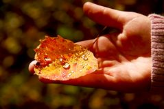 upadek ręce liści, Obrazy Stock