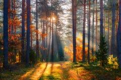 upadek Spadku lasu lasowy krajobraz jesie? b??kit d?uga natura ocienia niebo zdjęcia stock