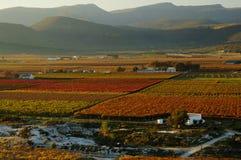 upadek vineyards22 obraz stock
