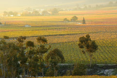 upadek vineyards27 Zdjęcia Royalty Free