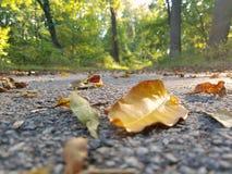 Upclose-Blätter stockfoto