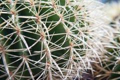 Upclose del cactus Imágenes de archivo libres de regalías