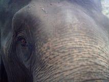 Upclose del elefante Foto de archivo