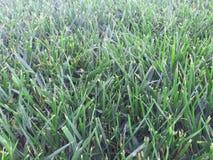 upclose dell'erba verde Immagini Stock