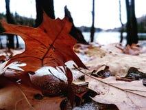 Macro leaf royalty free stock photo