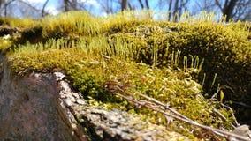 Upclose nieuw mos stock foto