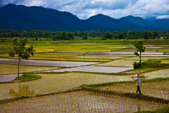 Upcountry field of Thailand Royalty Free Stock Image