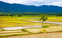 Upcountry field of Thailand2 Stock Photography