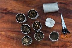 Upcycling indoor gardening Stock Photos