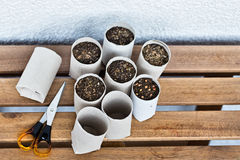 Upcycling indoor gardening Stock Photo