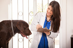 Updating a dog's medical history Royalty Free Stock Photo