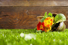 Upended flower pot and flowers Royalty Free Stock Images