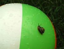 Uphill Battle. Snail climbing a wet beach ball Stock Photo