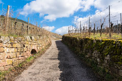 Uphill Cobblestone Path Vineyard Blue Sky Park Outdoors Walking. Hiking European Germany Warm Light Royalty Free Stock Photo