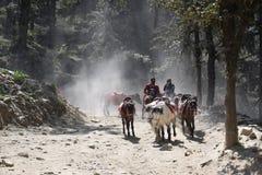 Horse Ride at Kufri. An uphill horse ride at Kufri stock photo