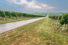 Uphill road through vineyards on cloudy day Royalty Free Stock Photos