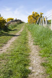 Uphill track in countryside. Scenic view of tyre marks on uphill track in countryside, Yellow Bracken in bloom at top of hill Royalty Free Stock Images