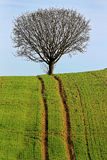 Uphill track to tree. A cart road in a field leads uphill to a single tree on the top. Success Stock Photos