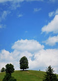 Uphill Tree. Shot of a isolated tree on a green hill against a beautifull blue sky with white clouds Stock Photos