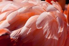 upierza flaminga obrazy stock