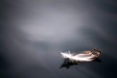 Upierza na wodnego anioła tła błękita pięknym ptasim czarnym zakończeniu Zdjęcia Royalty Free