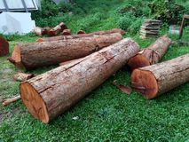 Łupka na tle drewniany trociny zdjęcie royalty free