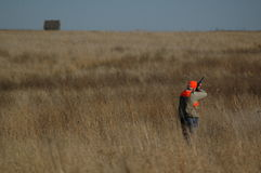 Upland Bird Hunter Stock Image