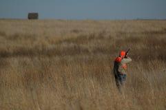 Upland Bird Hunter. Upland Bird Pheasant Hunter in Field Stock Image
