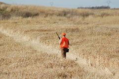 Upland Bird Hunter Stock Photos