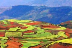 Upland colorido foto de stock