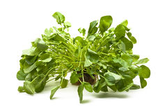 Upland cress Stock Photos