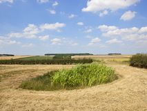 A small farm pond for conservation in summertime Royalty Free Stock Photos