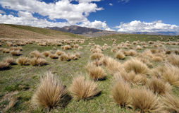 Upland grass above Lake Tepako Stock Image