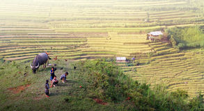 Upland kids. Mu Cang Chai - Yen Bai - Viet Nam Royalty Free Stock Photography