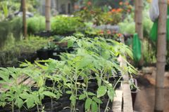 Upland nursery developed and maintained. This is an upland forest tree nursery developed and maintained. This is suitable for forest trees seedlings royalty free stock image