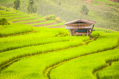 Upland rice farming in Thailand. Stock Photo
