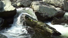Upland Stream. Video of small waterfalls in northern maryland during spring stock video
