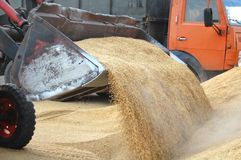 Uploading grain to truck Royalty Free Stock Photography
