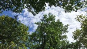 Uppåtriktad sikt av träd under ljus vind arkivfilmer