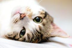 Upp för sida katt ner Royaltyfri Bild