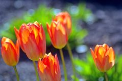 Upp för våren Arkivfoto